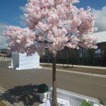 gallery-spring-cherryblossom2
