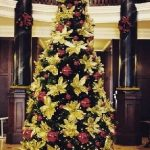 gallery-trees-goldpoinsettia