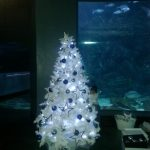 gallery-trees-whitetreeaquarium