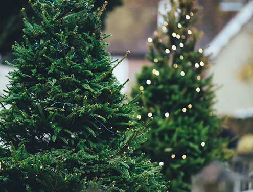 services-christmas-trees