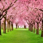 themes-event-spring