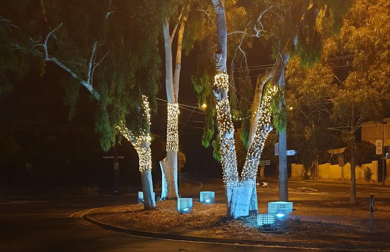 Fairylights wrapped around a gum tree